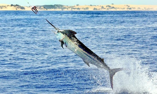 Fishing Trips In Pemba, Mozambique