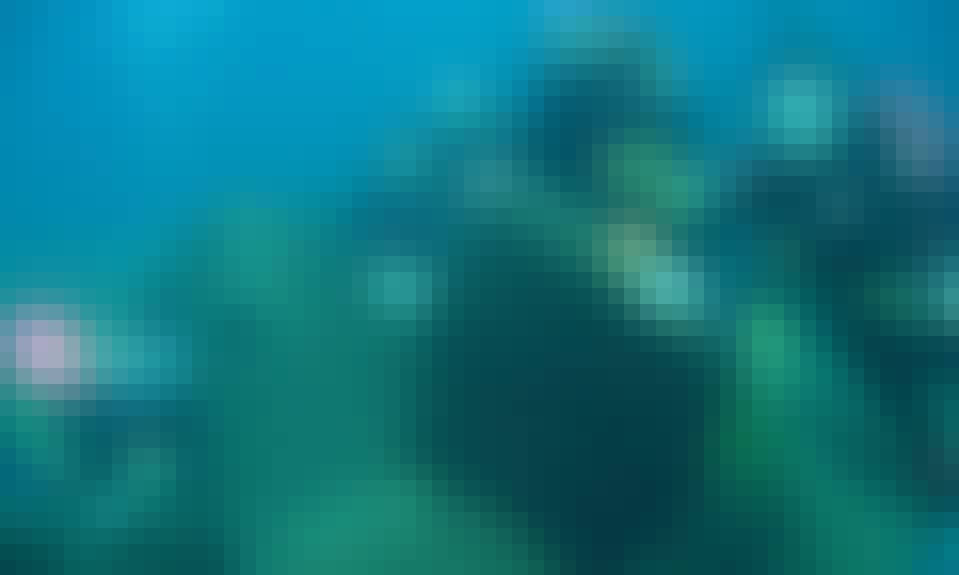 Diving in Korčula