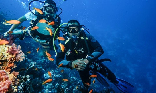 Diving Day Trips In Egypt
