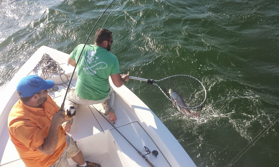 Il hook up charter NC