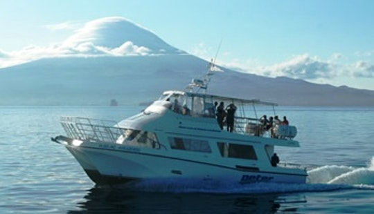 Whale Watching In Horta