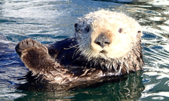 Guided Sea Kayak Tours  In Moss Landing