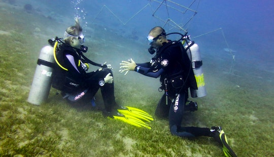 Try A Padi Diving Courses In Dahab