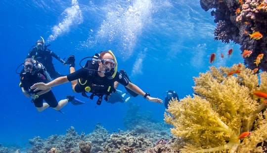 Guided Diving Trips And Courses In Dahab