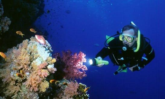 Diving Trips In Soma Bay