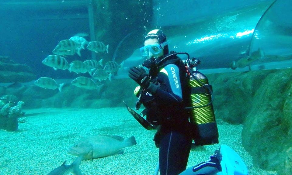 Diving With Sharks In Roquetas de Mar