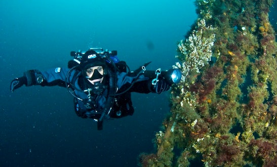 Diving Tour And Padi Courses In Picton