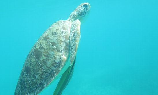 Guided Kayak And Snorkel Tour (turtles And Reef)