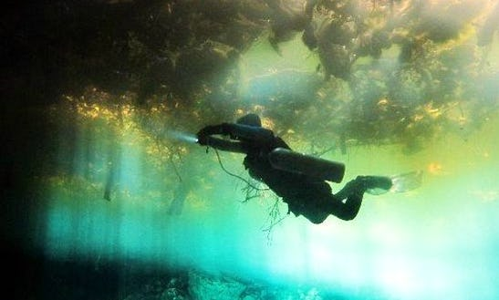 Mesmerizing Diving In The Riviera Maya Of Tulum, Mexico