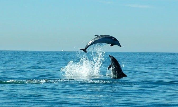Two Hour Dolphin Safari Tour in Portuguese Coast
