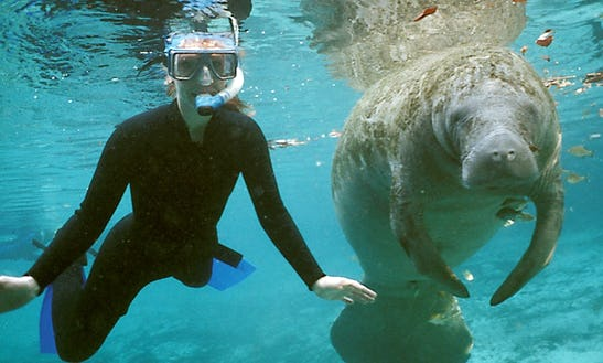 Manatee Tours By Boat In Crystal River