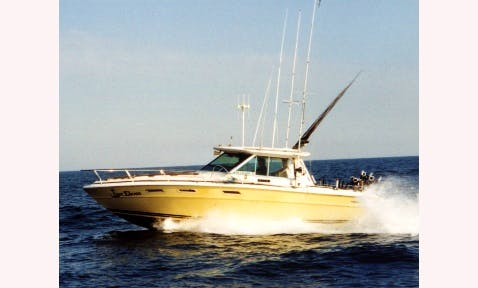 30' Sea Ray Hardtop Fishing Charter In Erie