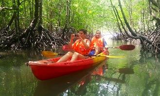 Mangrove Kayaking Tours in Langkawi