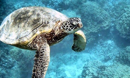 Turtle Watching Tours In Matrah
