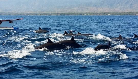 Dolphin Tours In Kuta Utara