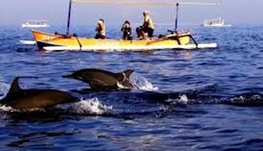 Dolphin Tour In Nusa Dua