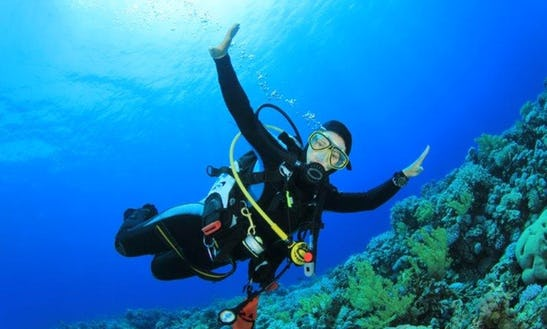 See The Underwater Landscape Of Bali, Indonesia - Book A Dive Trip Now!
