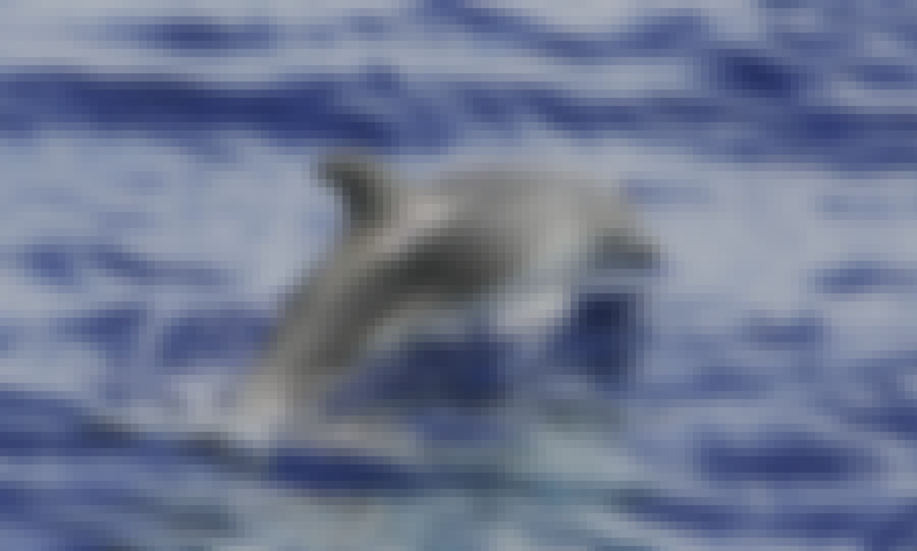 Whale watching Tour in Valle Gran Rey, La Gomera