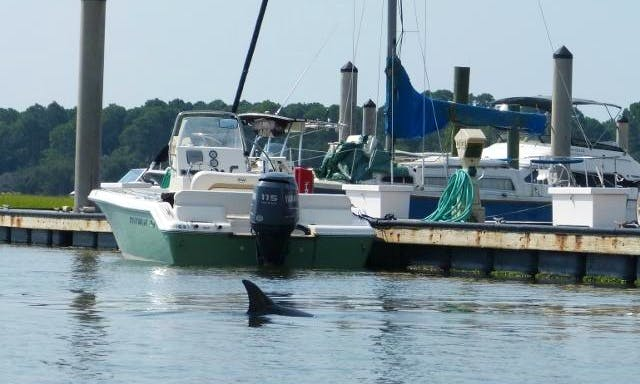 Dolphin Tour in Hilton Head Island
