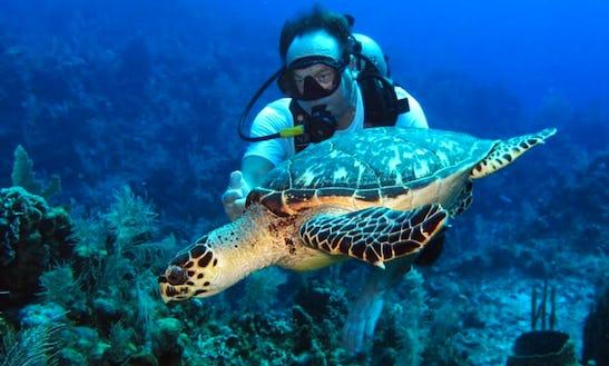 Diving Course In Roatán