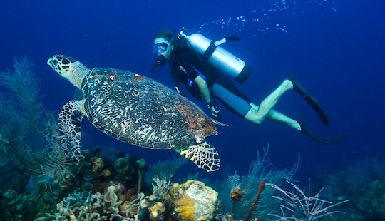 Diving Trips In Kuta Utara
