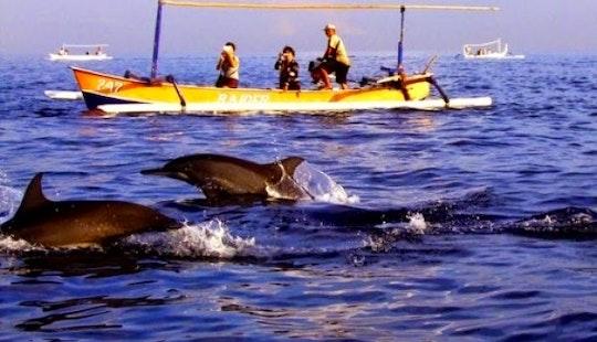 Dolphin Watching Tour In Denpasar Barat