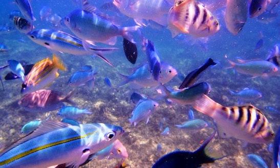Snorkeling Trips In Denarau Island