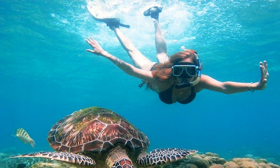 Diving Trips In Apo Island, Philippines