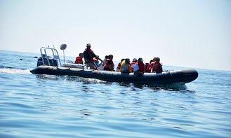 Zodiac Boat Trips in Les Îles-de-la-Madeleine, Québec