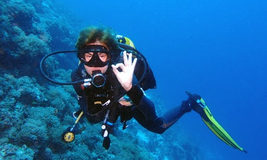 Diving Trips And Courses In Monterey
