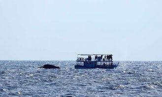Dolphin Tours in Kalpitiya
