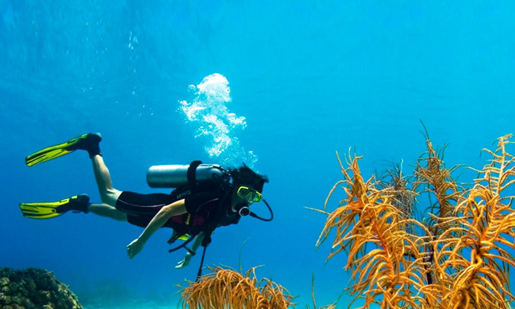 Discover the underwater scenery in Unawatuna, Sri Lanka   GetMyBoat