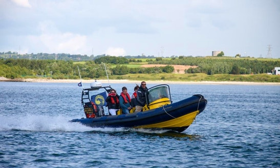 Rib Wildlife Tours In Cork, Ireland
