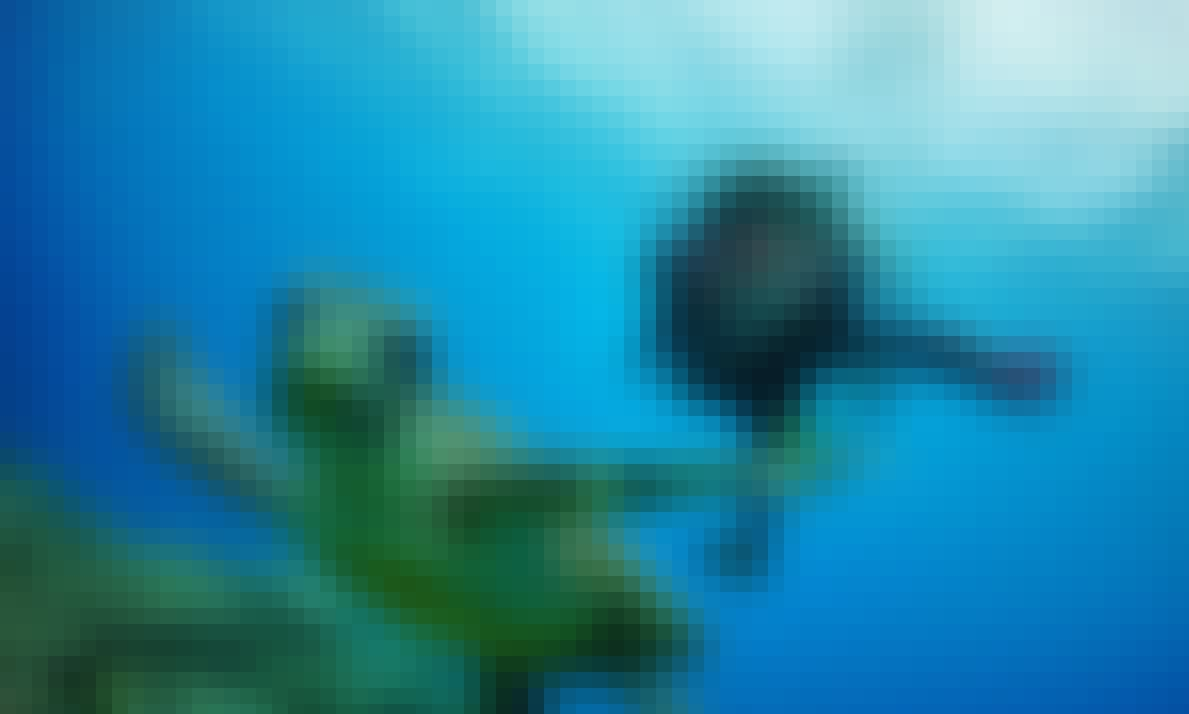 Diving Trips in Onna-son