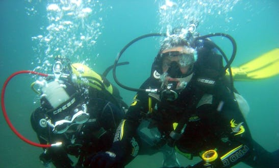 Diving In Kaikoura