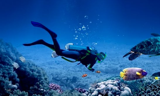 Snorkeling, Fun Diving Trips And Scuba Diving Courses In Trincomalee