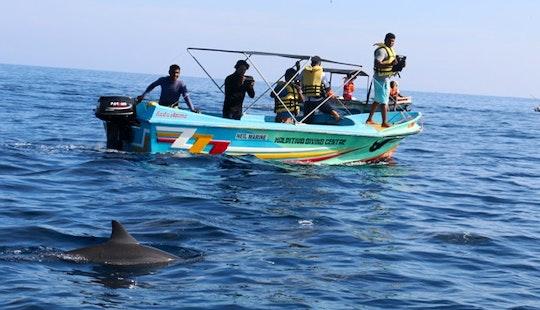 Dolphin & Whale Watching Tour In Yonago-shi
