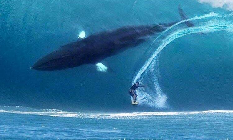 Surf Lesson & Hire in Tarifa