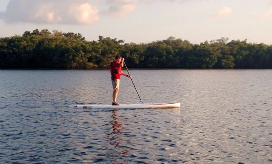 Paddleboard Rental And Tours In Clearwater