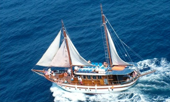 Venus Sea Cruises Tour In Paphos