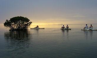 Mangrove Tour In Morne-À-l'Eau
