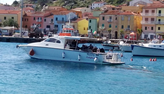 Scuba Lessons For All Levels (courses For Non-divers And Certified Divers) In Isola Del Giglio