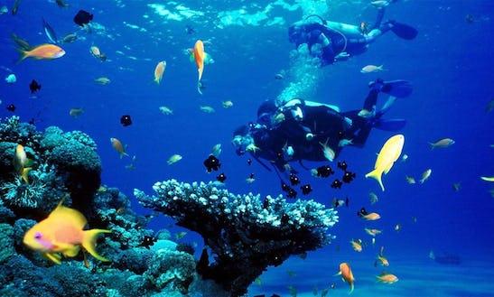 Scuba Diving Tour In Kaikoura Canterbury, New Zealand
