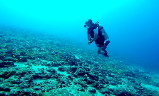 Daily Diving In Andaman