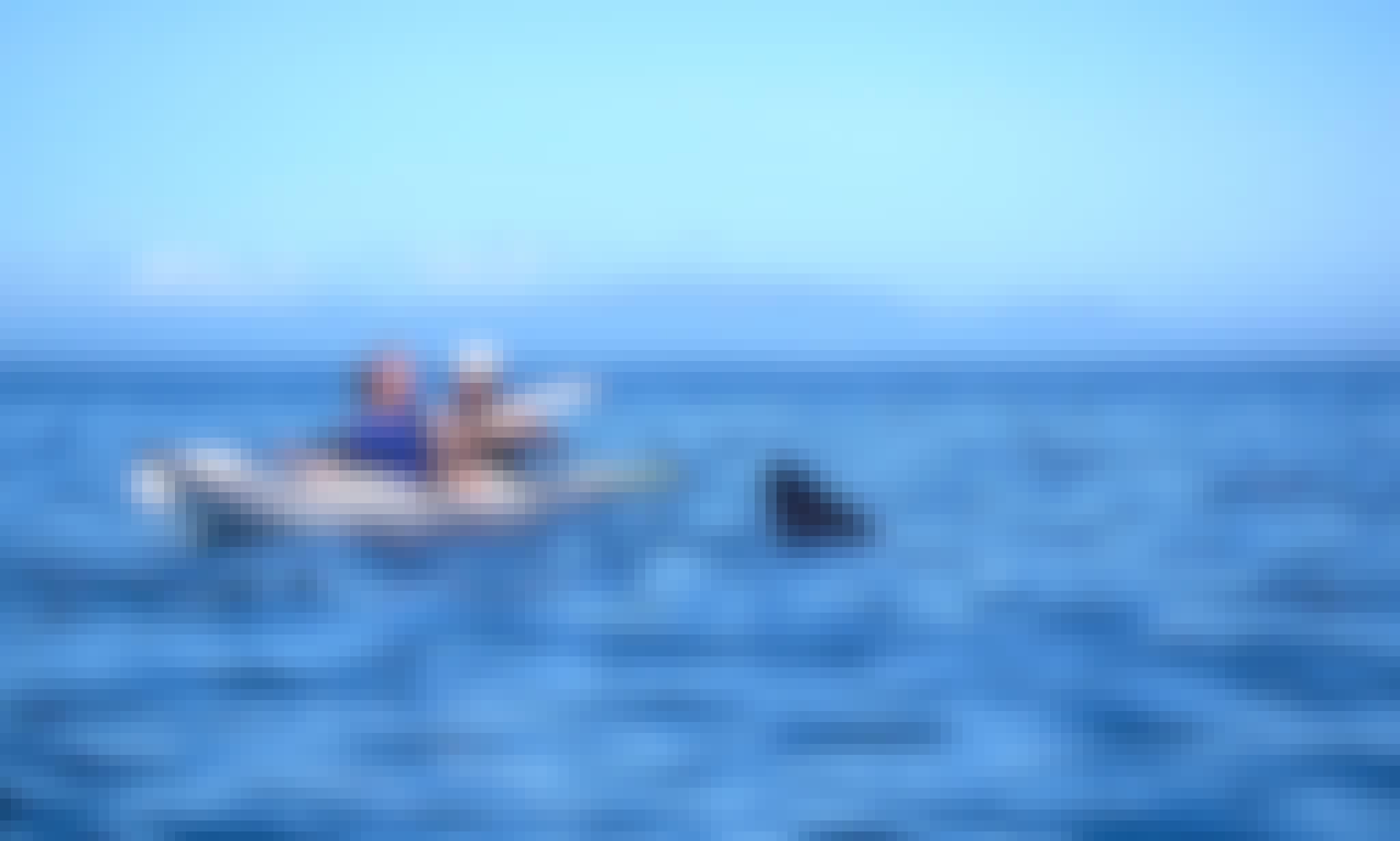 Watching Wildlife Kayak Trips In Glenuig