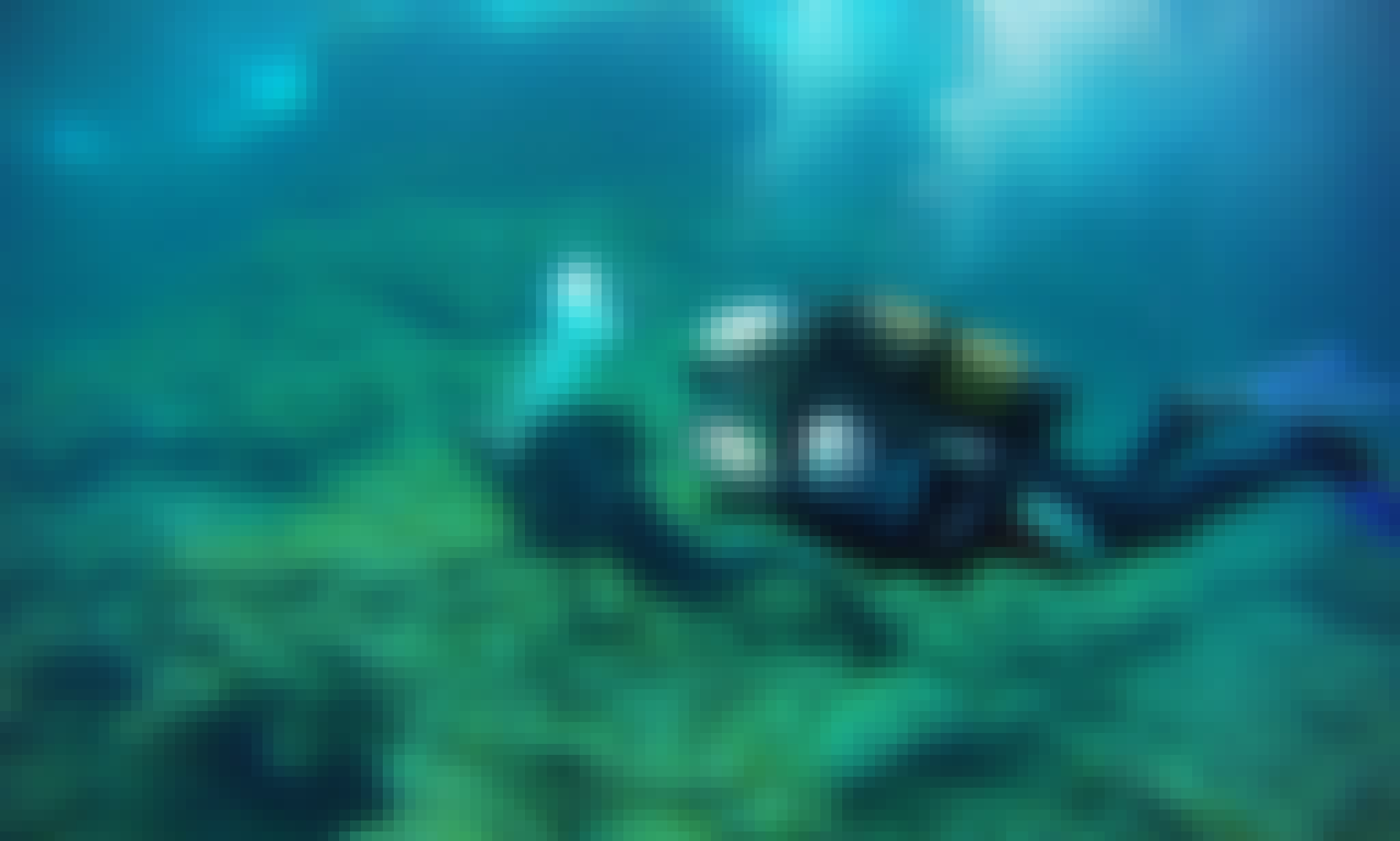Diving Trips and Courses In Portopetro