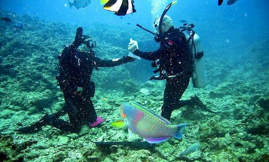 Diving Trips And Courses In Numazu-shi