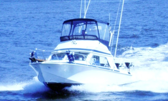 "26ft Command Bridge Cruiser Sportfisherman Boat Charter ""deep Respect"" In Vancouver, British Columbia"