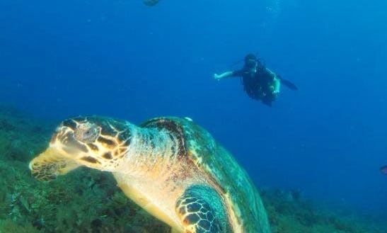 Diving Trips & Courses In Le Marin, Martinique