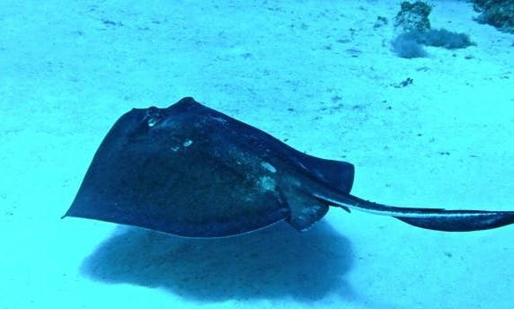 Diving Trips in Port Howe, The Bahamas